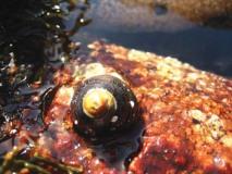 hermit-crab1.jpg