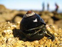 hermit-crab2.jpg