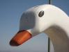 swan-boat.jpg