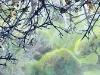 art-center-biersteker-oak-branches.jpg