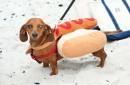 Food Dog or Dog Food-1182