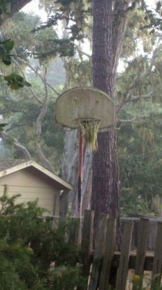 basketball hoop geo herbert