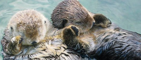 otters hold handsCMYK