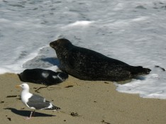 seals by cy