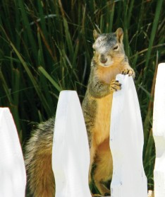 standing squirrel CMYK