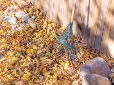 Leaf_rake_and_autumn_leaves_1wikimedia