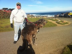 Molly and Rhyli, Irish Wolfhounds, make Pacific Grove an annual destination along with 30 of their closest friends from the Northern California Irish Wolfhounds Club who were walking the Rec Trail Sat., Jan. 17.