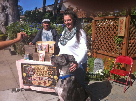 Charlie, the Blue Merle Great Dane, speaks for a treat as Kathi (in white) and Jef (behind the table) look on.