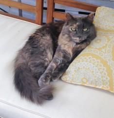 kiwi the cat